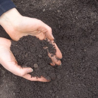 Photo of Gro-Max Soil