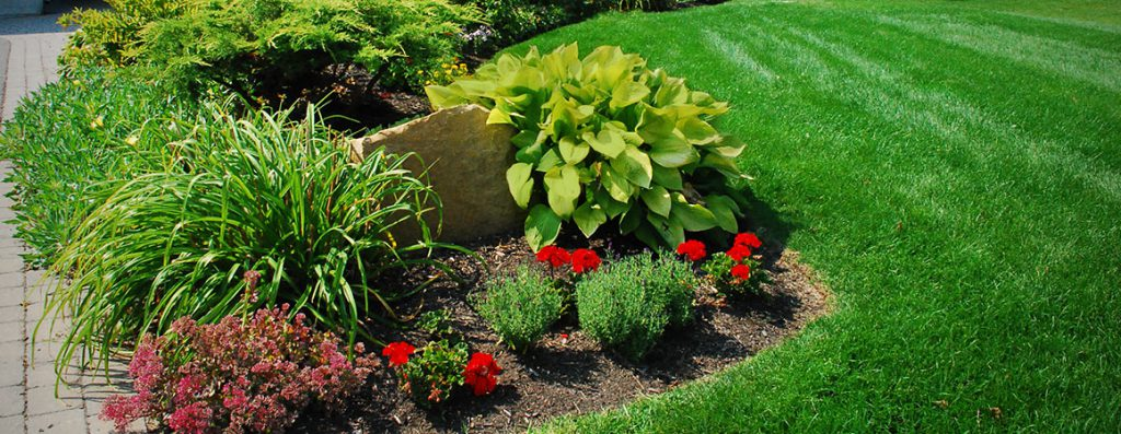 Photo of a garden using Greely's Topdressing Soil
