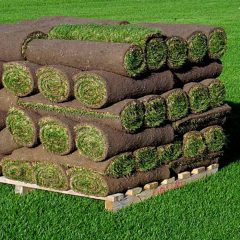Kentucky Bluegrass Sod Full Skid Of Sod Half Skid Of