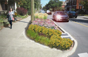 Image of a rain garden on Sunnyside Ave, Ottawa. Click here to learn more.